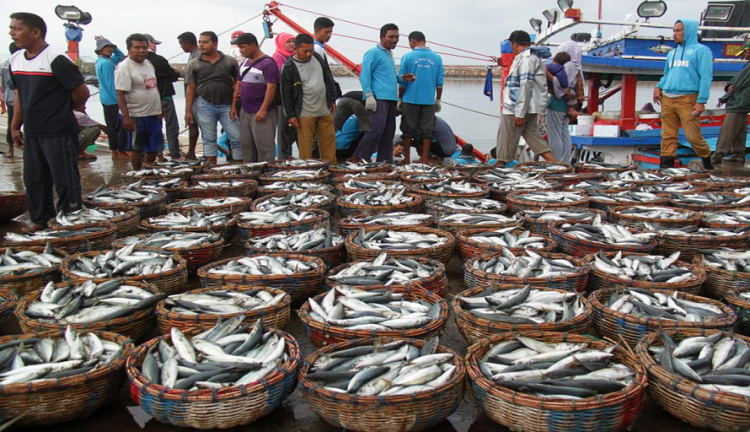 Aruna Fisheries Startup Will Raise Funding in 2020 to Expand