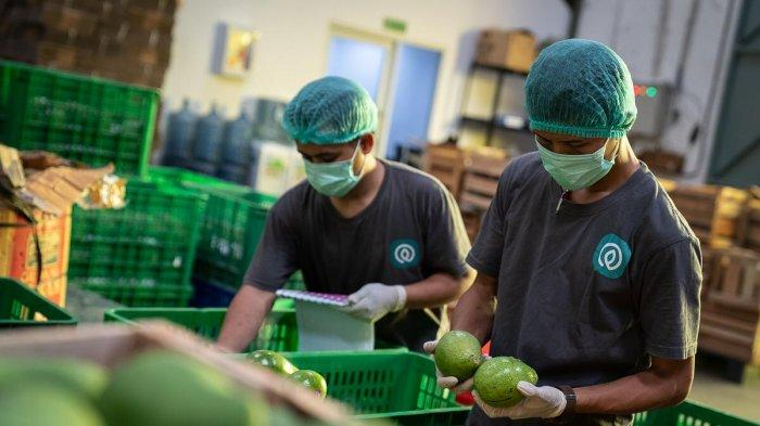 TaniHub Targets Direct Export of Local Farmers' Products Next Year