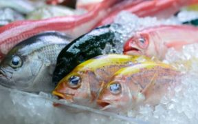 Fintech Crowdo Collaborates with eFishery to Give Loans to Fish Farmers