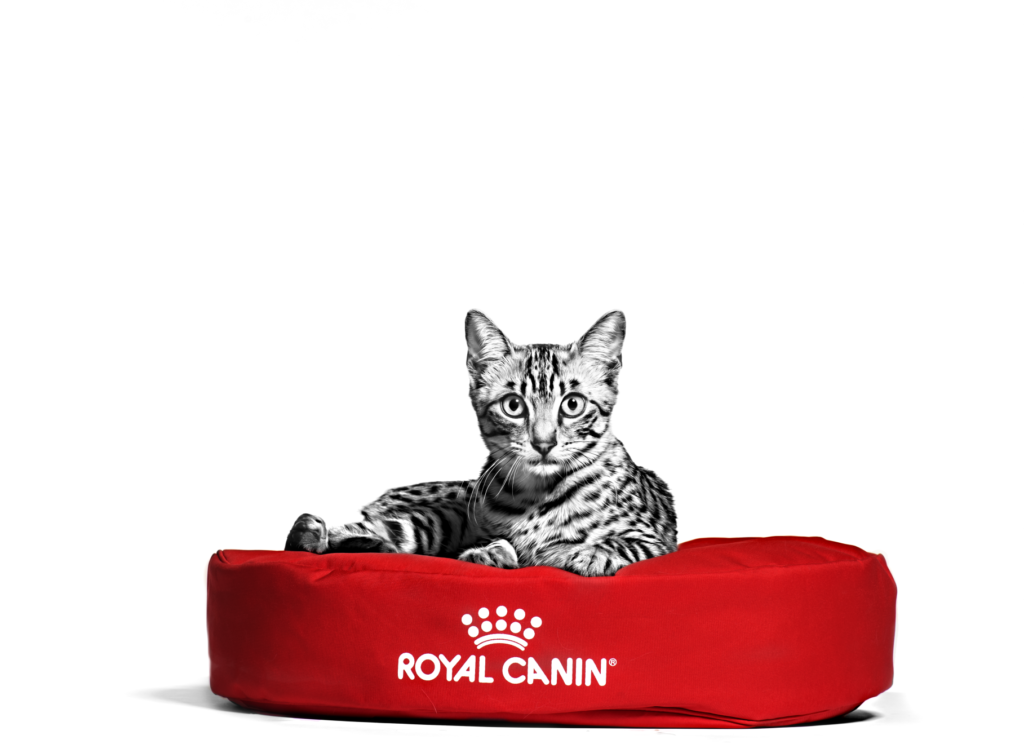 Royal Canin launches fund raising campaign for SPCA Selangor